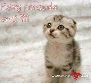Gatito lindo con bonitos pensamientos