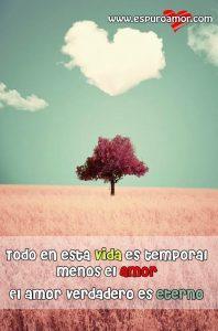 árbol con frase y nube de corazon