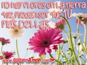 frases de amor con flores muy bonitas