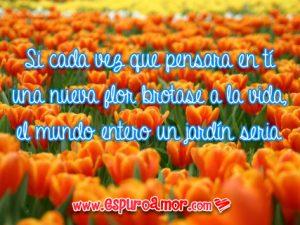 frases de amor con flores naranjas