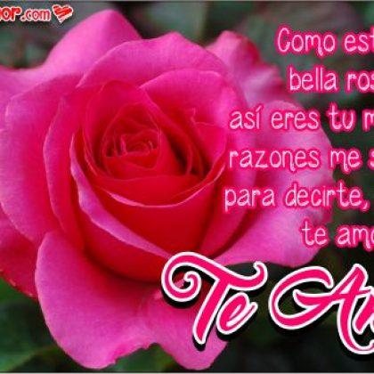 Frases de Amor con Bonitas Imágenes de Rosas