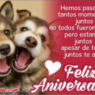 Imágenes de Aniversario con Tiernas Parejas de Perros
