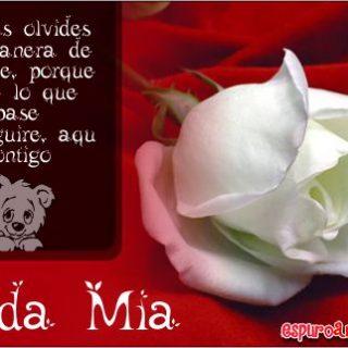 Imágenes de Rosas con Frases para Novias