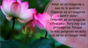 Reflexiones de amor con flores de loto