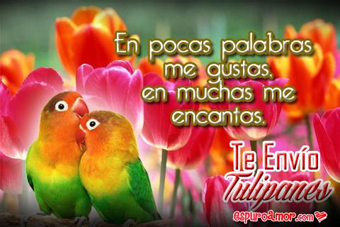 Imágenes de Loritos Cariñosos con Tulipanes para Enviar