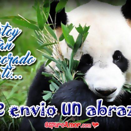 Imágenes de Tiernos Osos Panda con Te Envío Abrazo