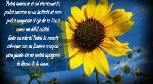 Imágenes de girasoles con poemas de amor