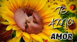 Imágenes de Girasoles con la frase Te Amo