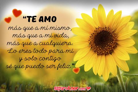 Bella flor girasol con un te amo