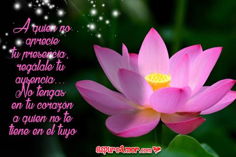 Flor loto con reflexiones lindas