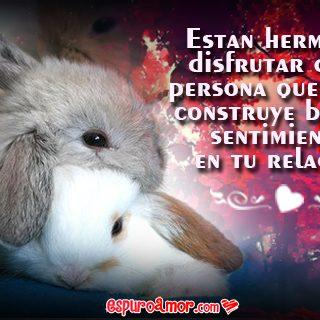 Fotos de Lindos Conejitos con Buenos Conejos de Amor