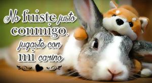Conejos con frases de desamor