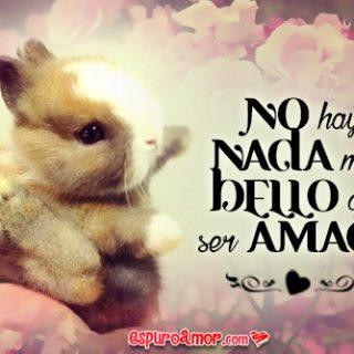 Conejos de Amor con Tiernos Conejitos para Facebook