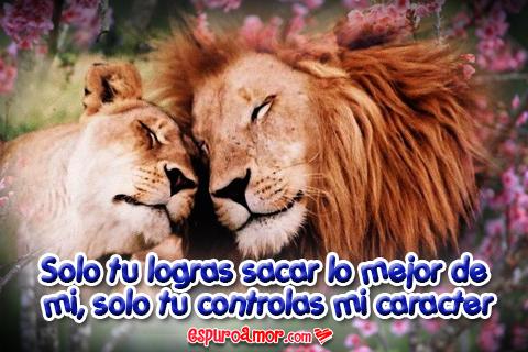 leones cariñosos