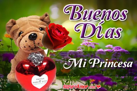 perrito regala rosa por la mañana a su princesa