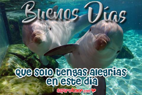 delfines para decir buenos días